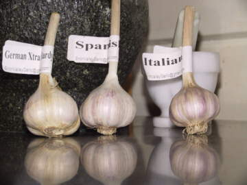 three types of garlic